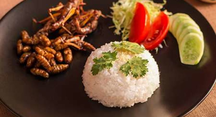 Eating insects might seem yucky but they are nutritious and there is no reason you cant