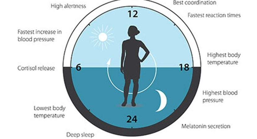 How eating feeds into the body clock