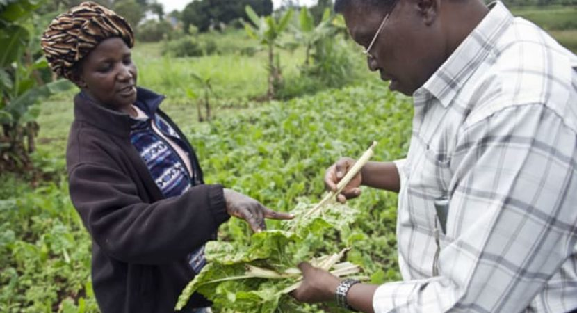 Focus on food security and sustainability