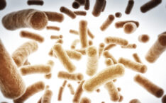 Global gut health experts guide growth of synbiotics