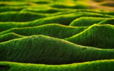 Boost to develop microalgae into health foods